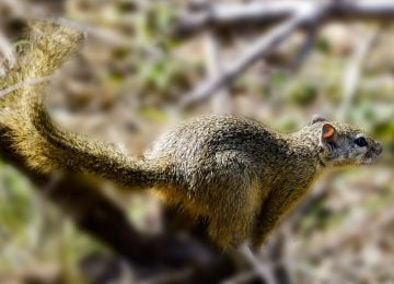 Long Tail SEO - What is it and How Does it Work
